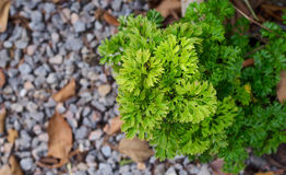 Fern in the garden. With leave green stock photo