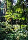 Fern garden. In morning spring at botanical garden Stock Photos