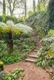 Fern Garden Steps fotografia stock