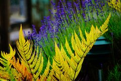 Fern garden. Vibrant colored ferns make up the front of this garden Royalty Free Stock Photography