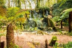 Fern Garden Waterfall immagini stock libere da diritti