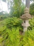Fern Garden royalty free stock photo