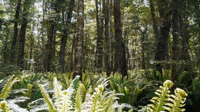 Fern glade Royalty Free Stock Photos