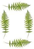 fern granic Fotografia Royalty Free