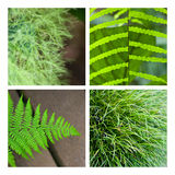 Fern and grass Stock Photography