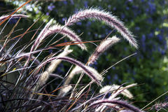 Fern grass in the wind Royalty Free Stock Images