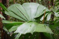 Fern. Green fern in Australia Royalty Free Stock Photos