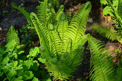 A fern Stock Image