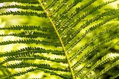 Fern, Green, Fern Plant, Fiddlehead Stock Photos