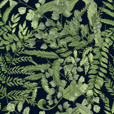 Fern green foliage on black background. Hand drawn seamless pattern with realistic plants. Colorful vector illustration. Fern green foliage on black background Royalty Free Stock Photo