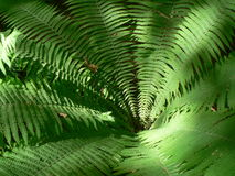 Fern. Green fern in the forest Stock Photo