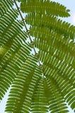 Fern green leaf Royalty Free Stock Photos