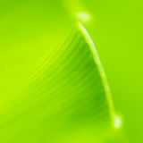 Fern. Is green leaf for fresh up your life stock image