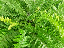 Fern Green Leafs Abstract Background Royaltyfri Fotografi