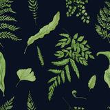 Fern green leaves on black background. Hand drawn seamless pattern with realistic plants. Colorful vector illustration. Fern green leaves on black background Royalty Free Stock Photos