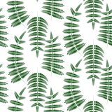 Fern green leaves seamless vector pattern. Foliage repeat background Royalty Free Stock Photos