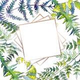 Fern green leaves. Watercolor background illustration set. Frame border ornament square. Fern green leaves. Leaf plant botanical garden floral foliage stock illustration