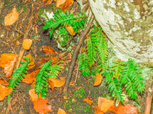 Fern green. Mountain fern green in the forest Stock Photography