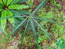 Strange green plant. Fern green plant  stem Royalty Free Stock Photo