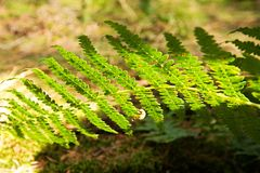 Fern Stock Images