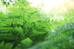 Fern green texture Stock Photos
