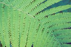 Fern green thicket. Green fern thicket summer foliage forest background Stock Images