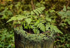 The fern grew in the foozle. The fern grew in the wood in the dkpl of the foozle Stock Image