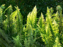 Fern Grotto Royalty Free Stock Photography