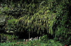 Fern Grotto stock photos