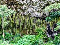 Fern Grotto State fotografía de archivo libre de regalías