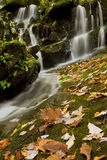 Fern Grotto Waterfall Stock Images