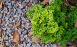 Fern on the ground. Green Stock Photography