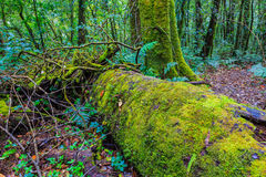 Fern grow on tree stub in tropical rain forest. Fern grow on tree at Doi inthanon in Chiangmai province,Thailand Royalty Free Stock Photography