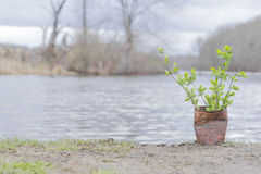 Fern Growing Rusty Can Stock Fotografie