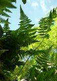Fern Growing vert sur le mur, l'arbre et le ciel bleu à l'arrière-plan Photos libres de droits