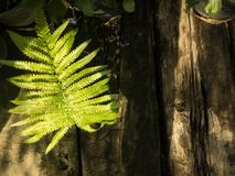 Fern grows on timber and tree Stock Photos