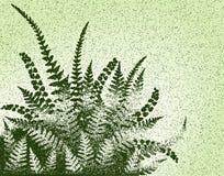 Fern grunge. Editable vector design of fern leaves and grunge Stock Photos