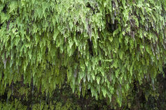 Free Fern Gully Royalty Free Stock Photos - 50419928