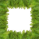 Fern Halloween autumn photo frame Stock Images