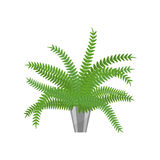 Fern.House plant realistic icon for interior decoration . Coniferous plant in flowerpot. vector illustration Stock Photo