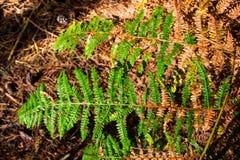 Fern i skogen Arkivfoton