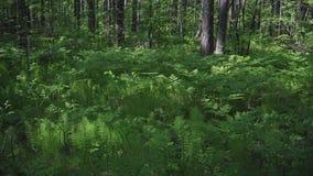 Fern i skogen stock video