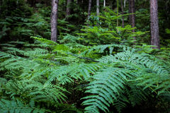 Fern. I think it is a nice place to relax Stock Photos