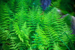 Fern Invasion Royalty Free Stock Photography