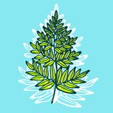 Fern isolated on blue background. Hand drawn. Vector illustration Royalty Free Stock Image