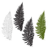 Fern, isolated elements for design on a white background. Vector Stock Photo