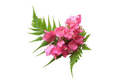 Fern of colorful spring flowers bouquet isolated on white backgr Royalty Free Stock Photography