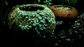 Fern and ivy on old earthenware Stock Photo