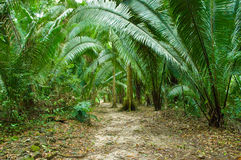 Fern-jungle. Gigantic fern plants along a jungle path to the mayan ruins of el ceibal, guatemala stock photography