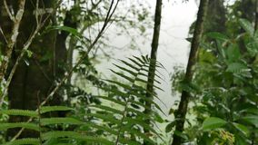 Fern in the jungle after the rain stock video footage